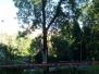 Prasklý strom, I. Šustaly - 17. 6. 2016