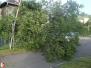 Spadlý strom, Haškova - 17. 6. 2016