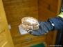 Likvidace hmyzu - 20.8.2008