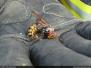 Likvidace hmyzu - 14. 8. 2009