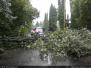 Spadlý strom - 31. 8. 2010
