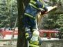 Spadlý strom - 29. 4. 2012