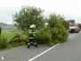 Spadlý strom - 2. 7. 2012