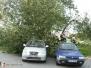 Spadlý strom - 27. 9. 2012