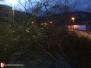 Spadlý strom - 10. 2. 2020