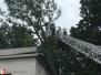 Spadlý strom - 21. 7. 2019