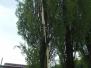 Strom zasažený bleskem, Ke koryčce - 23. 5. 2017