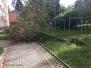 Vyvrácený strom - 3. 10. 2020